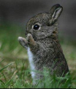 Bunny-baby-bunny-3518600-500-583